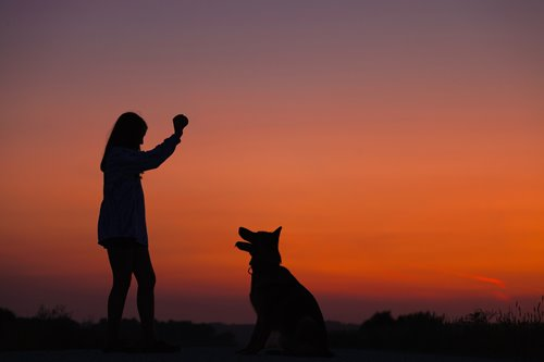 How Dogs Can Help With Depression Nami National Alliance On Mental Illness